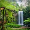 Rainforests: Year 6