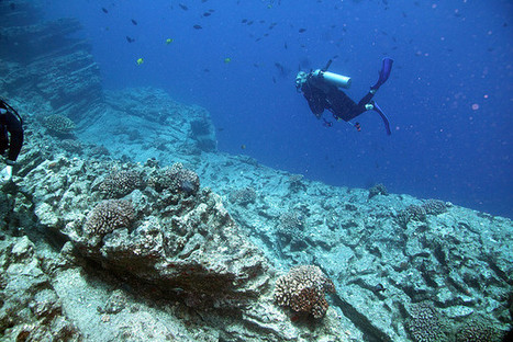 A Mysterious Disease Is Killing Hawaii's Coral | Smart News - Smithsonian (blog) | everett ce marine biology | Scoop.it
