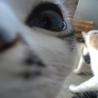 Gatos: inspiração para o cotidiano