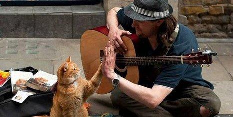 La increíble historia del gatito que le cambió la vida a un músico callejero | Mi VENTANA al MUNDO | Scoop.it
