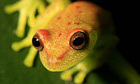 Amphibians facing 'terrifying' rate of extinction | AJC's Frogroom | Scoop.it