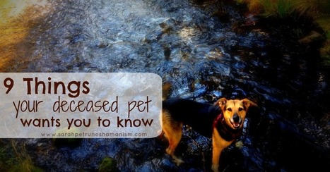 9 Things Your Deceased Pet Wants You to Know | Pet Sitter Picks | Scoop.it