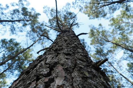 La forêt en Aquitaine - Industriels du sciage en Aquitaine   Eco-construction et Eco-conception   Scoop.it