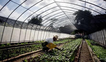Cuba's new, experimental urban cooperatives » peoplesworld | Workercoops | Scoop.it