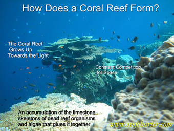 How Does a #CoralReef Form? ~ Great Barrier Reef ~ Cairns, #Australia | Rescue our Ocean's & it's species from Man's Pollution! | Scoop.it