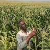 Youth, Agriculture and Food Security