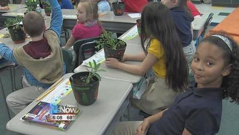 Liberty Arts Magnet Students in Lima, Ohio Learn Science, Social Studies through Herbs | School Gardening Resources | Scoop.it