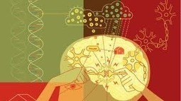 Gene Expression » Does brain plasticity trump innateness? | Ideal You | Scoop.it