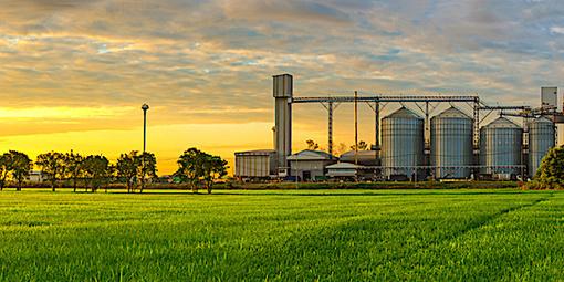 Le blé francais de retour dans un marché des céréales très concurrentiel - Wikiagri.fr