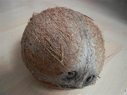 Cocaine-filled coconuts from the Dominican Republic found by customs agents at Florida port | The Billy Pulpit | Scoop.it