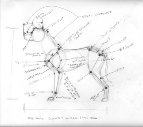 Canine Anatomy Reference   Drawing References a...