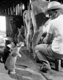 Answers: Is It Okay for My Cat to Have Milk?   Cats Rule the World   Scoop.it
