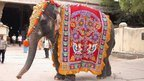 Obese elephants given slimming help | No Such Thing As The News | Scoop.it