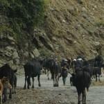 kuenselonline » Blog Archive » Will we work? | BhutanKingdom | Scoop.it