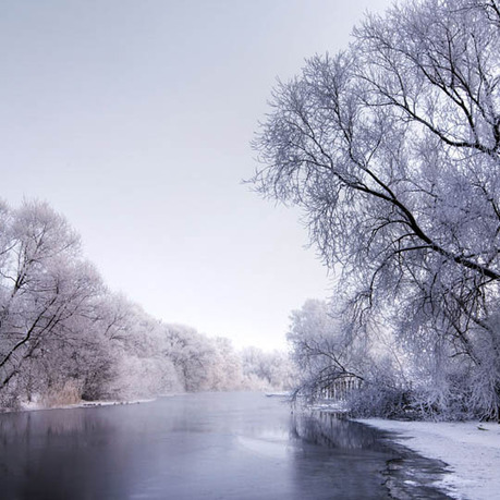 35 Snowy Tree Photos | Interesting Photography | Scoop.it