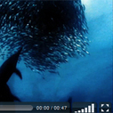 10 Beautiful HTML5 Video & Audio Players for WordPress | Wordpress in Higher Education | Scoop.it