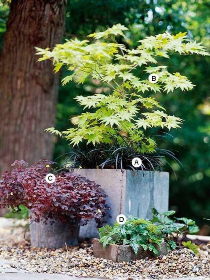 Container-Garden Recipes for Shade | Container Gardening | Scoop.it