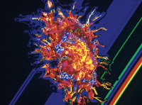 New mechanism of action for PARP inhibitors discovered | Breast Cancer News | Scoop.it