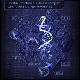 Cell - Crystal Structure of Cas9 in Complex with Guide RNA and Target DNA | learning plant | Scoop.it