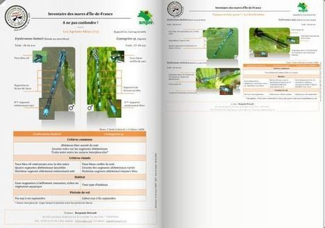 Guide en ligne de reconnaissance des odonates | Revue de Web par ClC | Scoop.it