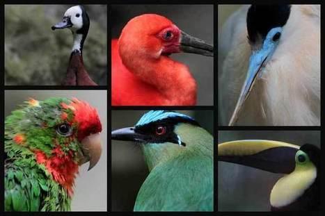 Este 9 de mayo se celebra el Día internacional de las Aves   Educacion, ecologia y TIC   Scoop.it