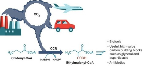 Synthetic biology pulls CO2 out of the atmosphere  | Synthetic Biology | Scoop.it