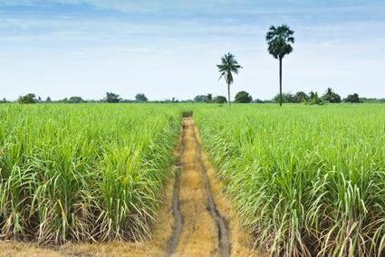 A Maurice, de nombreuses familles réclament leurs terres exploitées depuis trois siècles par des compagnies sucrières | décroissance | Scoop.it