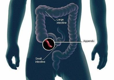 Scientists Finally Discover The Function of the Human Appendix | enjoy yourself | Scoop.it