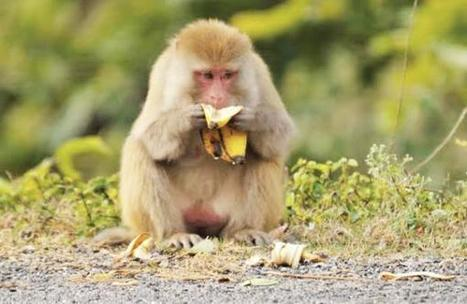 Four medical students of CMC were suspended for brutally torturing and killing a monkey   Nature Animals humankind   Scoop.it