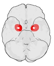 Brain Region Size Linked To Number Of Facebook Friends   Philosophy and Science of Mind and Brain   Scoop.it