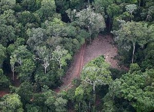Brazilian President Vetoes Amnesty for Illegal Logging | Environment News Service | The Wild Planet | Scoop.it