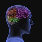 5 principes issus des neurosciences pour favoriser l'apprentissage en formation | apprendre - learning | Scoop.it