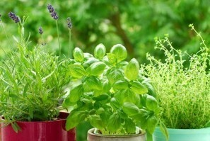 Grow 7 Healing Herbs At Home | Vertical Farm - Food Factory | Scoop.it