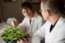 Novel approach to curing crop diseases tested | Plant health | Scoop.it