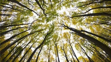 Do we underestimate the power of plants and trees? - BBC News | Quirky (with a dash of genius)! | Scoop.it