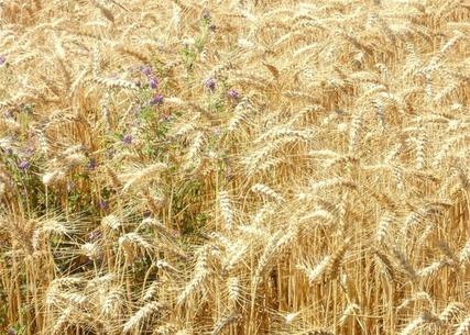 AGRICULTURE Les paysans veulent récupérer leurs droits sur les ... - Objectif Gard | SOUVERAINETÉ ALIMENTAIRE PARTOUT | Scoop.it
