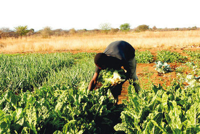Agriculture gains 100% - The New Age Online | Climate Smart Agriculture | Scoop.it