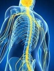 SCLÉROSE en PLAQUES: Détruire le système immunitaire pour mieux le reconstruire – The Lancet | Scientific Innovations in Biology | Scoop.it
