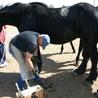 Horse Kinetics