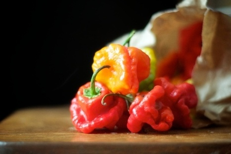 Fermented Hot Chili Sauce Recipe | The Authentic Food & Wine Experience | Scoop.it