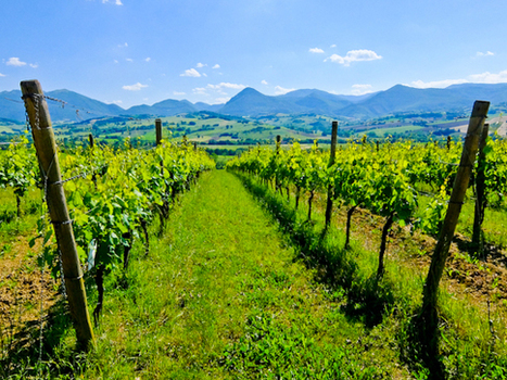 Planet Appetite:  Bioculture - Art Walks and Organic Wine in Le Marche, Italy | Hideaway Le Marche | Scoop.it