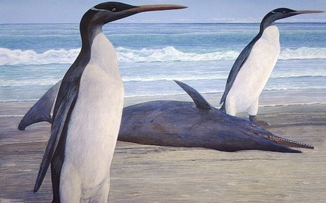 6.5 foot tall prehistoric penguin fossil uncovered in Antarctica | No Such Thing As The News | Scoop.it