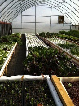 With Retirement on Horizon, an Ohio Couple Start an Aquaponic Business | Aquaponics in Action | Scoop.it