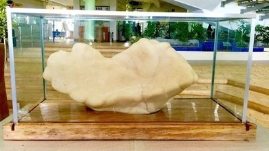 World's largest pearl sits under a bed for 10 years | DiverSync | Scoop.it