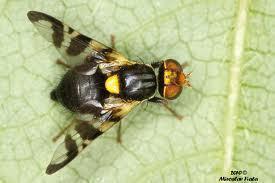La Confédération combat la libre circulation des plantes et des insectes | EntomoNews | Scoop.it