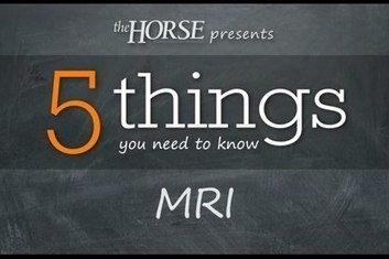 5 Things You Need to Know: MRI | Equine matters | Scoop.it
