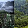 bosques tropicales