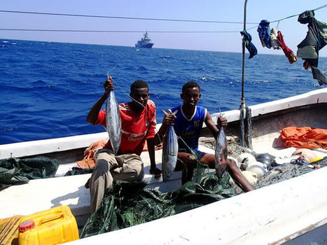 SOMALIA:United Nations to improve management of fisheries in Somalia - Midnimo Information Center | Marine Conservation | Scoop.it