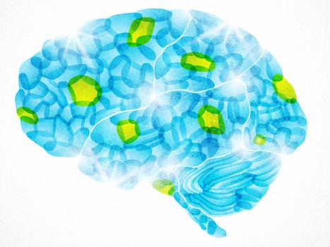 Our Buggy Brain : NPR | Mom Ed | Scoop.it