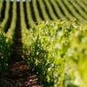 Images et infos du monde viticole
